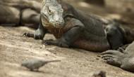 Kunjungan wisatawan ke Taman Nasional Komodo naik 11% tahun lalu